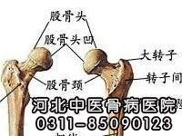什么是股骨